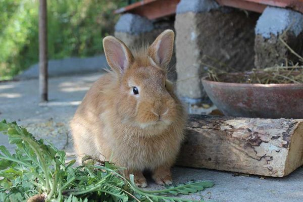 agriturismo-la-scalera-prodotti-coniglio