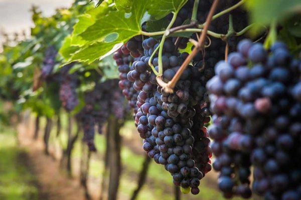 agriturismo-la-scalera-prodotti-vino